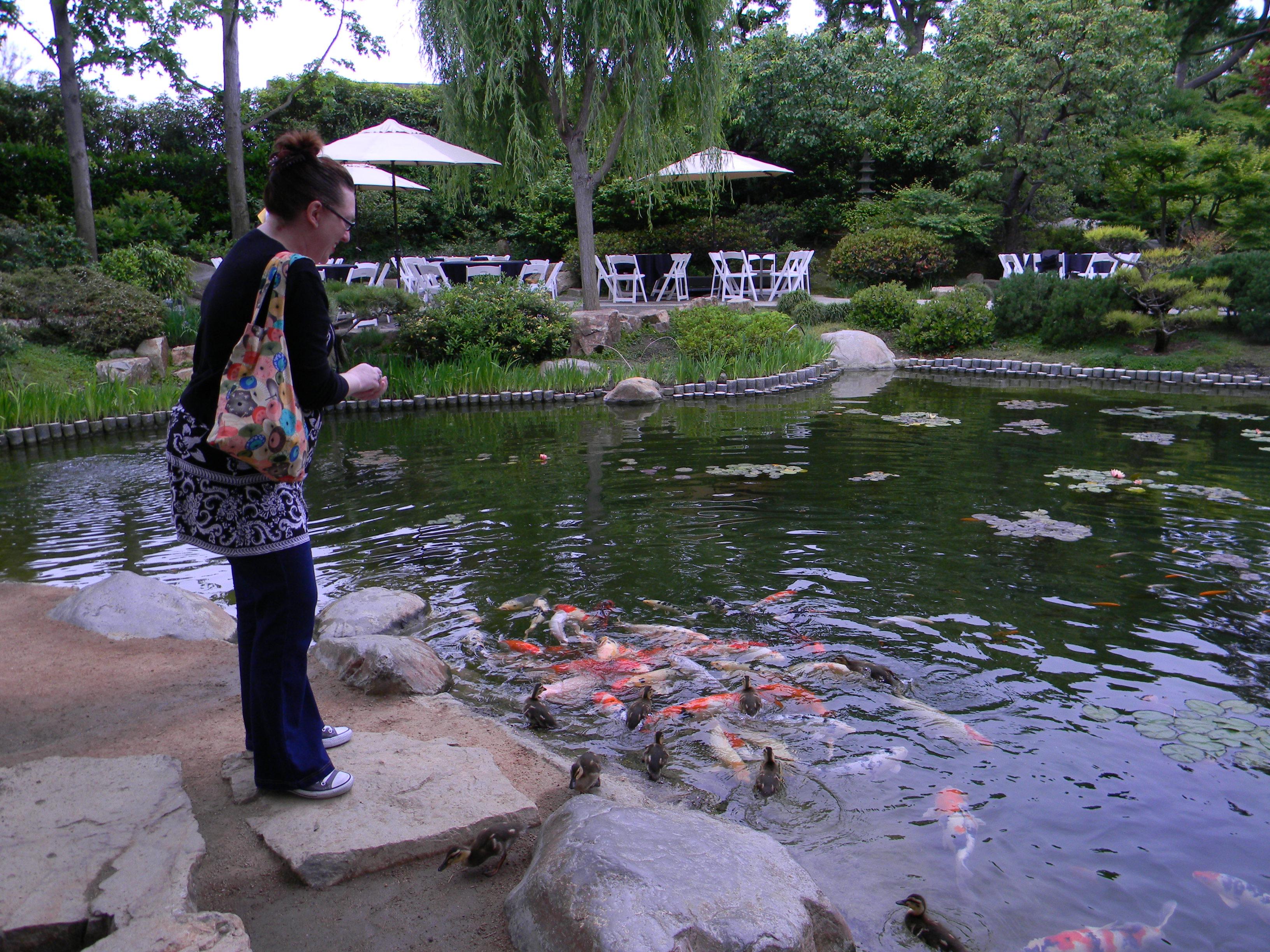 andrea loves koi - Japanese Koi Garden